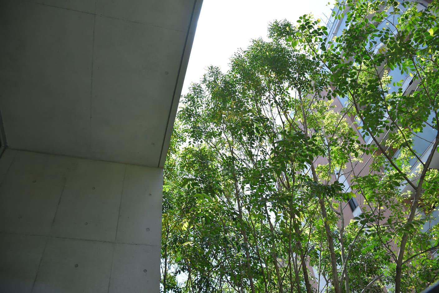 スペースオリオントップページ。事業所バルコニーのローズマリーの木の画像